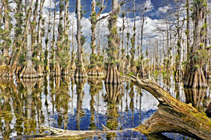 Gator Hook Cypress Dome